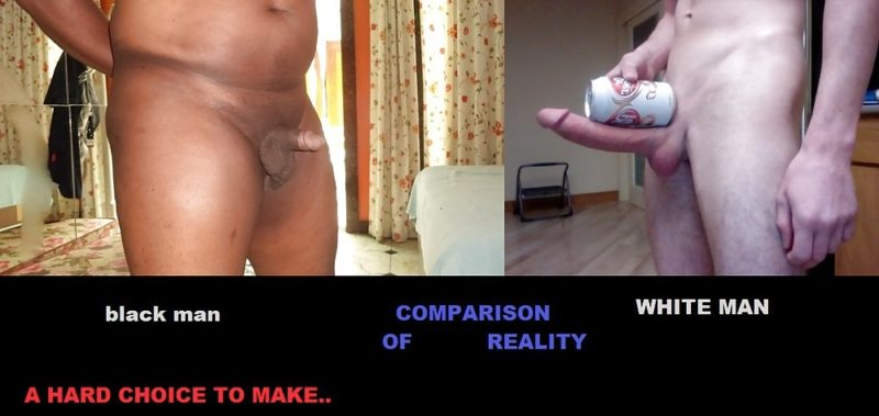 White Cock Wins 8 - Another Comparison of The Reality